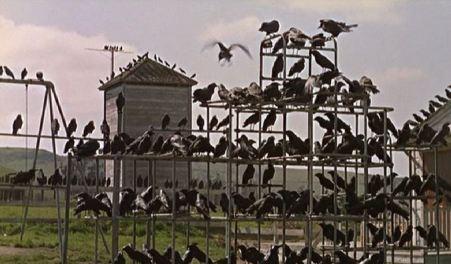 the-birds-hitchcock-playground